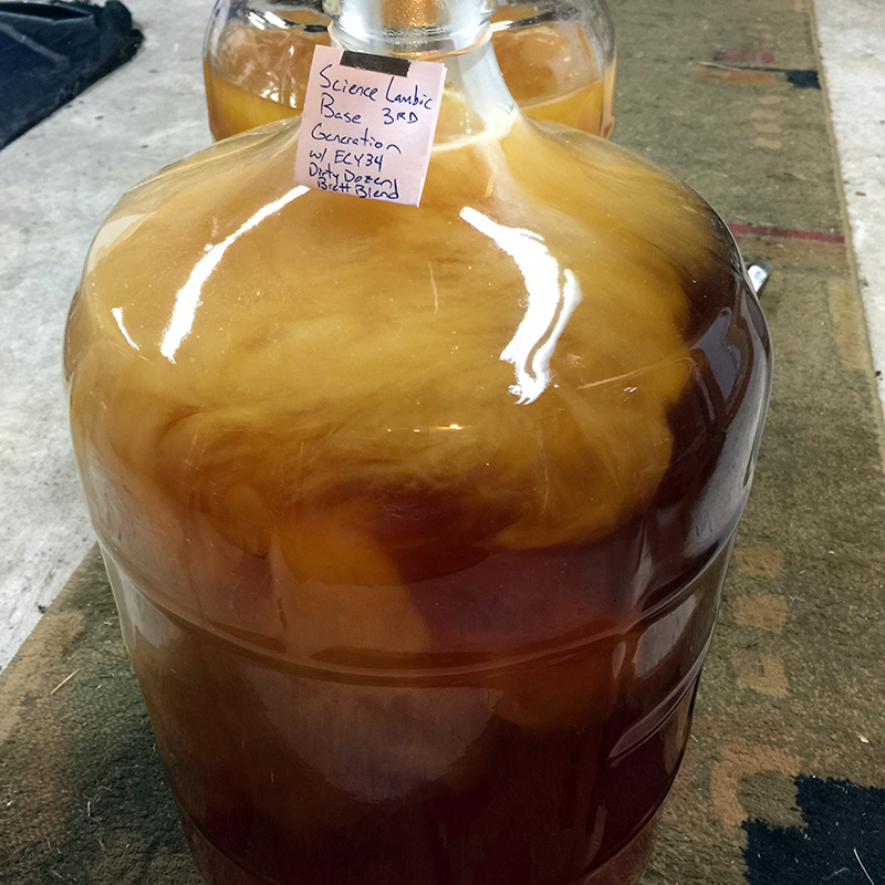 "A young sour beer receiving a pitch of Brettanomyces ""Dirty Dozen"" Blend (Step 3)."